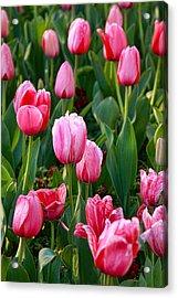 Pretty Pink Acrylic Print by Joan Bertucci