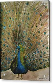 Pretty Plumage Acrylic Print by Betty Pimm