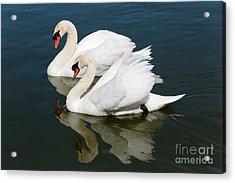 Pretty Swan Pair Acrylic Print by Carol Groenen