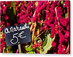 Price Tag On Amaranth Flowers Acrylic Print by Panoramic Images