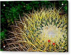 Prickly Acrylic Print by Camille Lopez