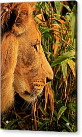 Profiles Of A King Acrylic Print by Laddie Halupa