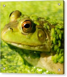Profiling Frog Acrylic Print by Optical Playground By MP Ray