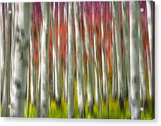 Progression Of Autumn Acrylic Print by Adam Romanowicz