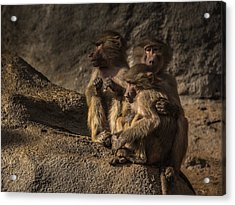 Protection From The Family Acrylic Print by Chris Fletcher