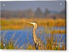 Proud Profile Acrylic Print by Al Powell Photography USA