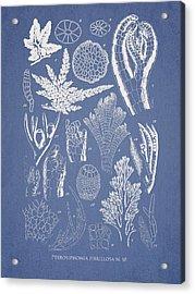 Pterosiphonia Fibrillosa Acrylic Print by Aged Pixel