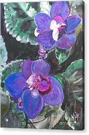 ptg   African Violets Acrylic Print by Judy Via-Wolff