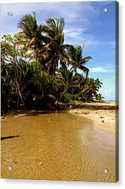 Puerto Rican Dream  Acrylic Print by Danielle  Broussard
