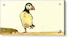 Puffin Bird Acrylic Print by Juan  Bosco
