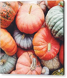 Pumpkins Galore Acrylic Print by Kim Fearheiley