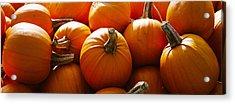 Pumpkins, Half Moon Bay, California, Usa Acrylic Print by Panoramic Images
