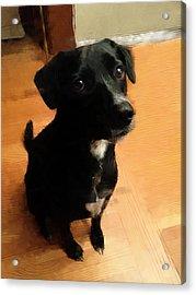 Puppy Dog Eyes Acrylic Print by Paul Gioacchini