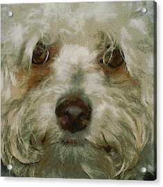 Puppy Eyes Acrylic Print by Ernie Echols