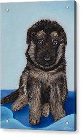 Puppy - German Shepherd Acrylic Print by Anastasiya Malakhova
