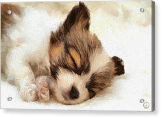 Puppy Nap Acrylic Print by Gun Legler