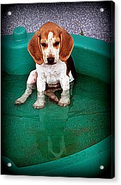 Puppy Refection  Acrylic Print by Lynn Griffin