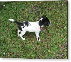 Puppy Sammy Acrylic Print by Abneris Verdecia
