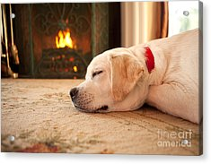 Puppy Sleeping By A Fireplace Acrylic Print by Diane Diederich