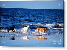 Pups On The Beach Acrylic Print by Linda Mesibov