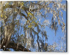 Pure Florida - Spanish Moss Acrylic Print by Christine Till