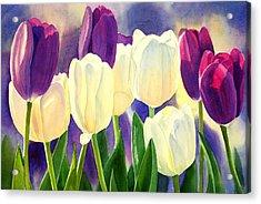 Purple And White Tulips Acrylic Print by Sharon Freeman