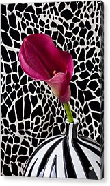 Purple Calla Lily Acrylic Print by Garry Gay
