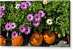 Purple Daisies And A Touch Of Orange Acrylic Print by Jean Goodwin Brooks