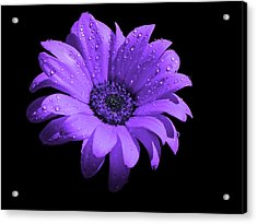 Purple Flower With Rain Acrylic Print by Bruce Nutting