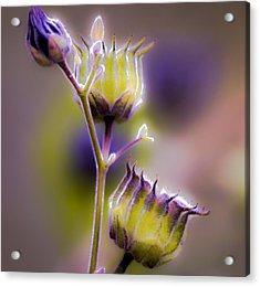Purple Haze Acrylic Print by Optical Playground By MP Ray
