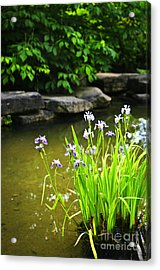 Purple Irises In Pond Acrylic Print by Elena Elisseeva