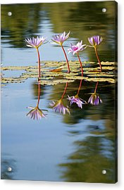 Purple Lillies Acrylic Print by Peter Tellone