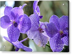 Purple Orchids Acrylic Print by Kathleen Struckle