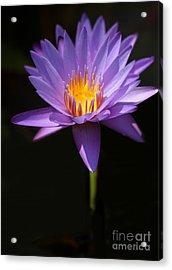 Purple Petals Acrylic Print by Sabrina L Ryan