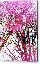 Purple Reflection 35mm Film Acrylic Print by Dave Morgan