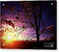 Purple Skies And Walnut Trees Acrylic Print by Garren Zanker