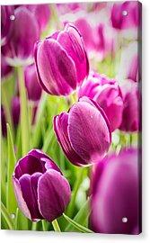 Purple Tulip Garden Acrylic Print by  Onyonet  Photo Studios
