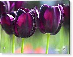 Purple Tulips Acrylic Print by Heiko Koehrer-Wagner