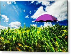 Purple Umbrella In A Field Of Corn Acrylic Print by Bob Orsillo