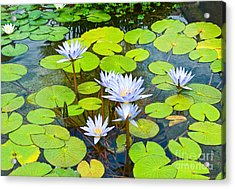 Purple Water Lilies In A Pond. Acrylic Print by Jamie Pham