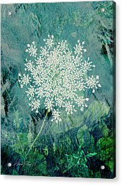 Queen Anne's Lace  Acrylic Print by Ann Powell