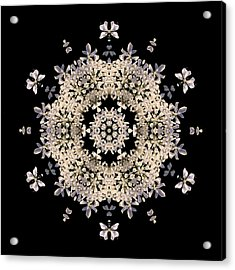 Queen Anne's Lace Flower Mandala Acrylic Print by David J Bookbinder