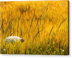 Queen Anne's Lace Acrylic Print by Theresa Tahara