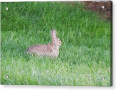 Rabbit In The Grass Acrylic Print by Michael Stowers