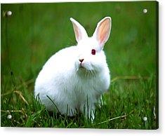 Rabbit On Grass Acrylic Print by Lanjee Chee