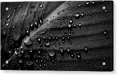 Rain Acrylic Print by Bob Orsillo