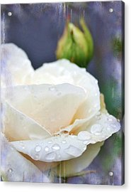 Rain Drops On Roses Acrylic Print by Cathie Tyler