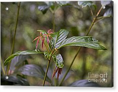 Rain Forest Plant Acrylic Print by Wendy Townrow