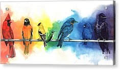 Rainbow Birds Acrylic Print by Antony Galbraith