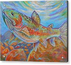 Rainbow  Acrylic Print by Jenn Cunningham